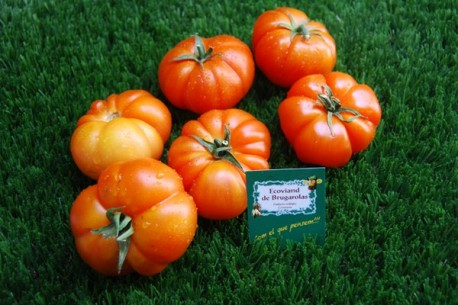 Tomaquet verd amanida