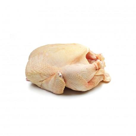 Pollo ecológico entero limpio