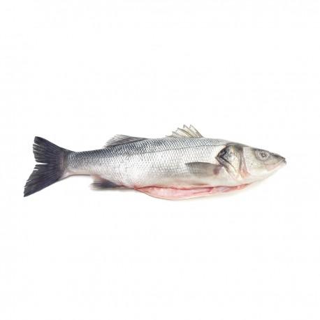 Congelado Lubina Bio  (Dicentrarchus labrax)